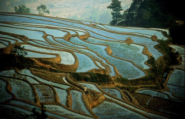 Terraços de Arroz Honghe Hani