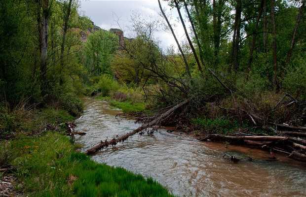 La senda entre Pálmaces y Pinilla