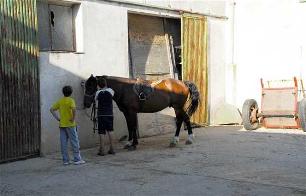 Equestrian Club Leganes