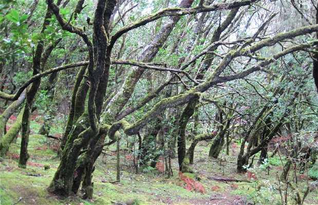 Through the forest. Laguna Grande