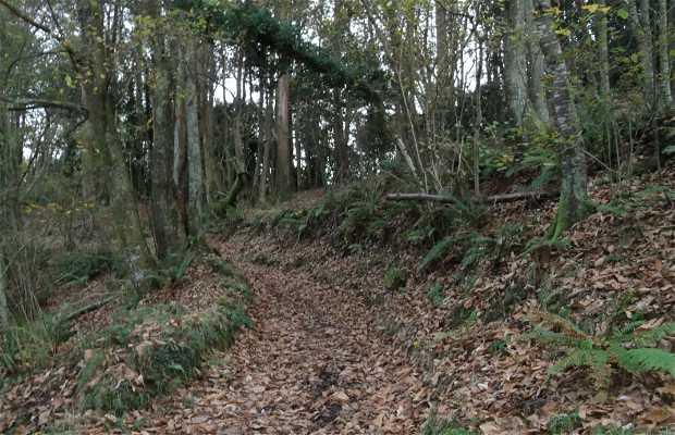 Bosques de Cabranes.