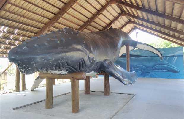 Centro De Visitantes Instituto Baleia Jubarte - Parque Nacional Marinho dos Abrolhos
