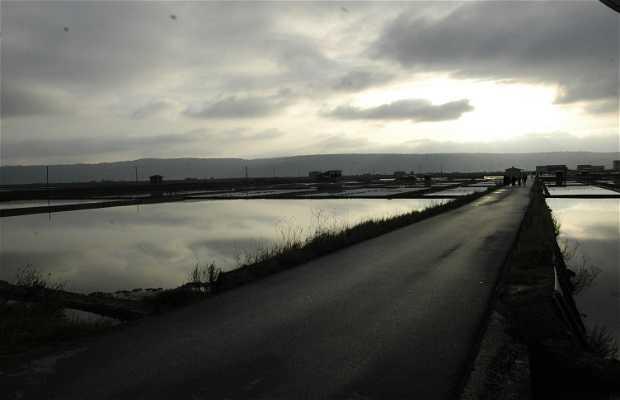 Salinas Sečovlje