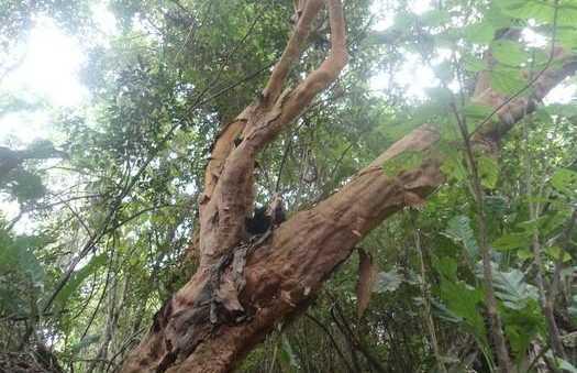 Los Arayanes del Parque Tayrona