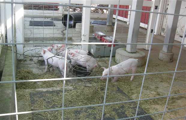 Farm-in-the-Zoo
