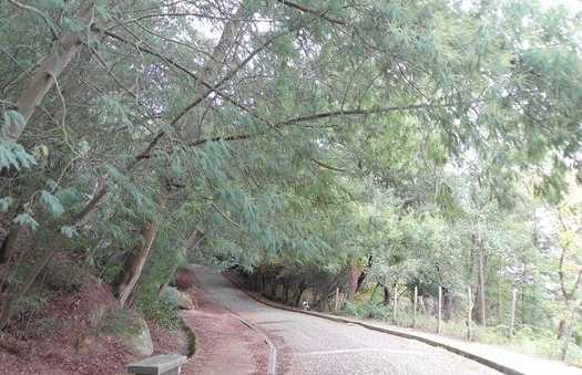 Monte Caracol
