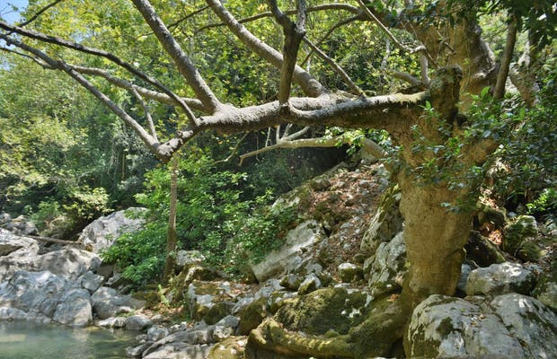 Río Abraham