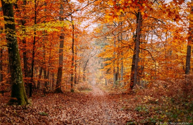 Fontainebleau Wood