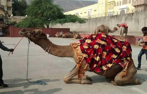 Jaipur en Rickshaw