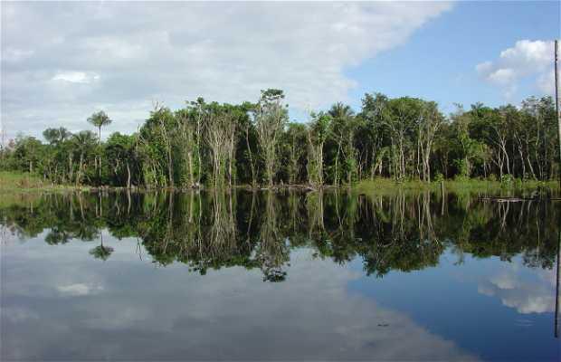 Course de Survie en Amazonie