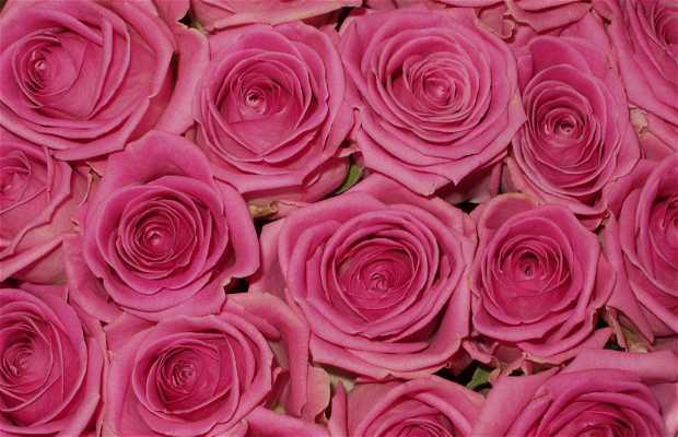 La piazza dei fiori di Murcia