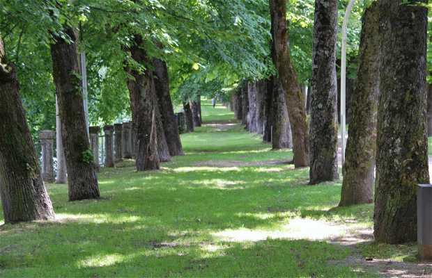 Bosque de Olot