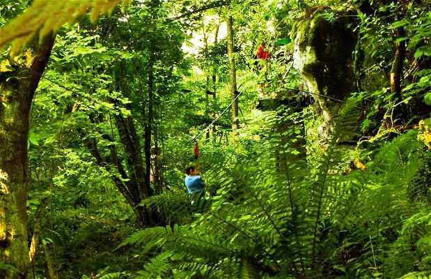 Selva asturiana: Aventura en Llanes