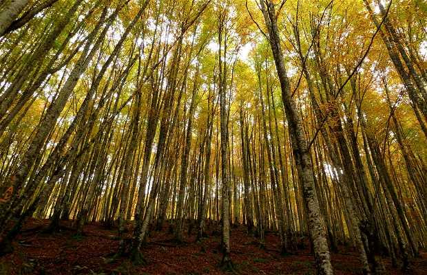 Sendero del bosque Zabaleta