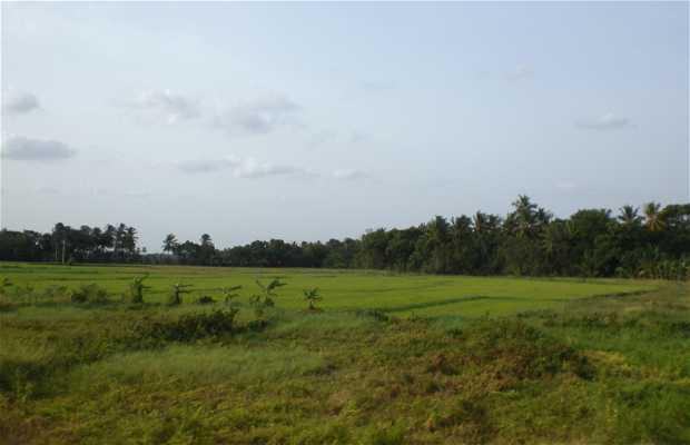 De Sigiriya a Polonnaruwa
