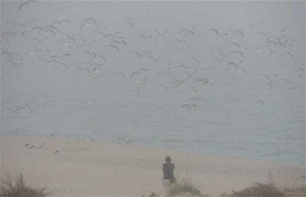 Playa de Area Maior o Longa de Louro