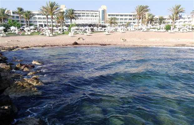 Ledra beach