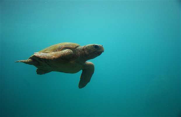 Kélonia; el observatorio de las tortugas marinas