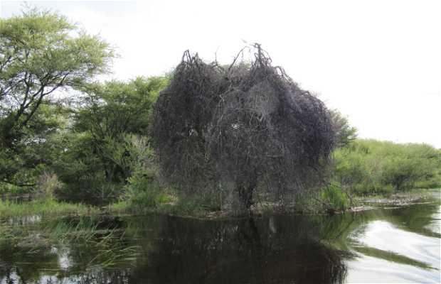 Paseo en barca por el río Thamalakane y Okavango