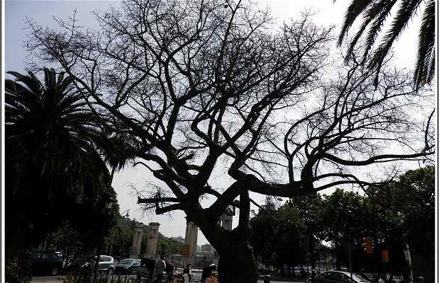 "Jardín del legendario ""Palo borracho"" o ""barrilito"" (Málaga)"