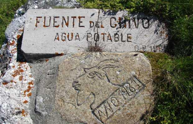 Fuente del Chivo