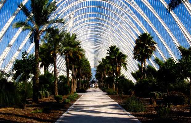 Jardin de turia valence 63 exp riences et 82 photos - Jardin del turia valencia ...