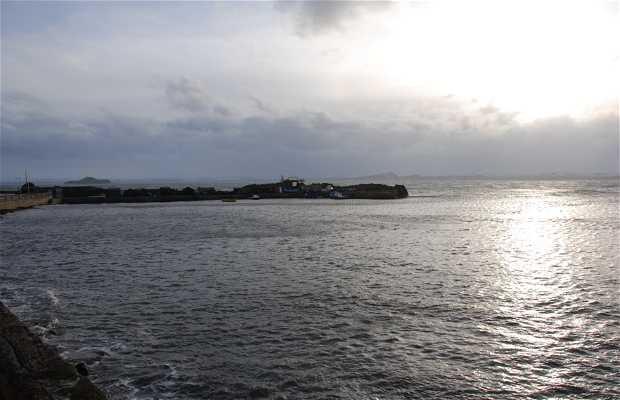 King Horn Puerto Pesquero