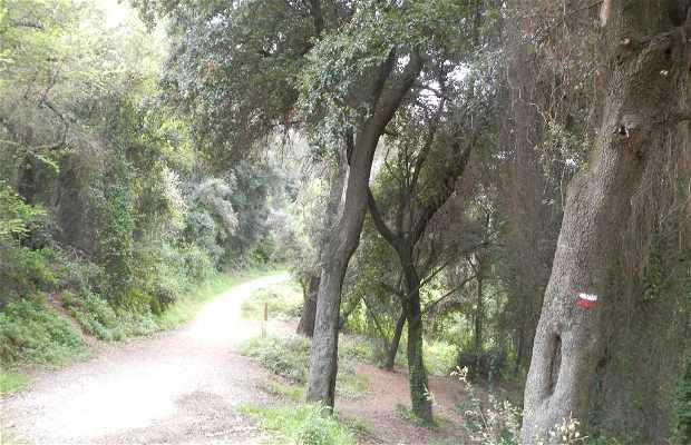 Del Baixador de Vallvidrera a Montacada i Reixac
