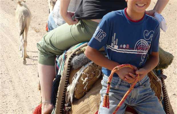Chemin des ruines fait en chameau