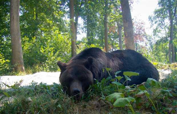 Reserva de osos