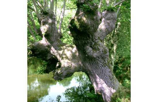 Bosque de Ibarrola