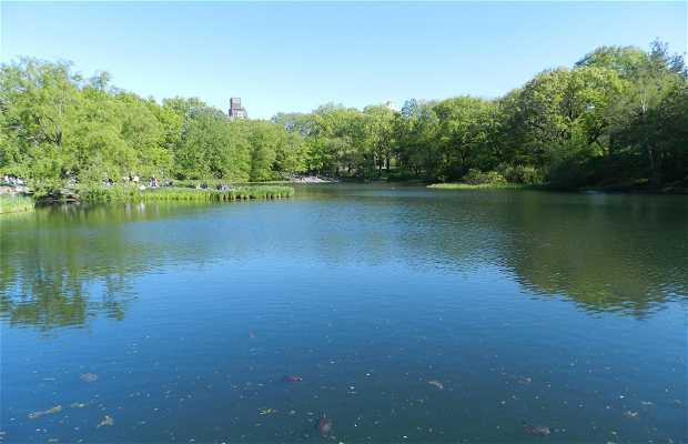 Turtle Pond (Central Park)