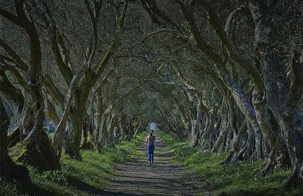 Le Manoir de Santa Cruz de Ribadulla
