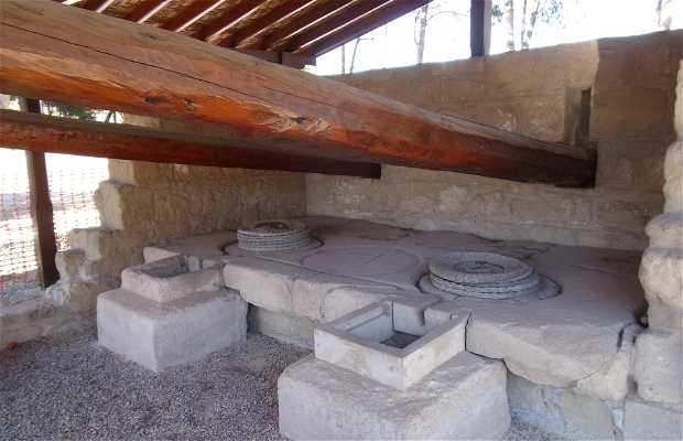 Museo Arqueológico de Larnaka