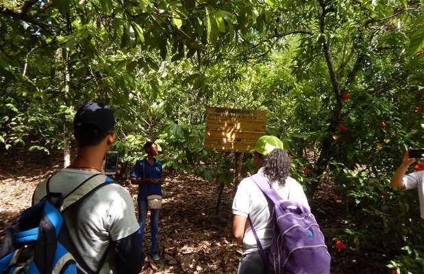 Finca Agroforestal del Café