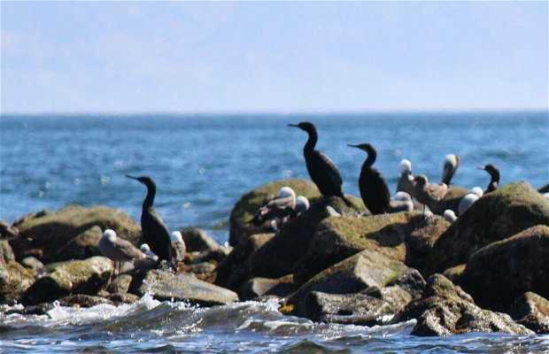 Mirador de aves Bahía de los Ángeles