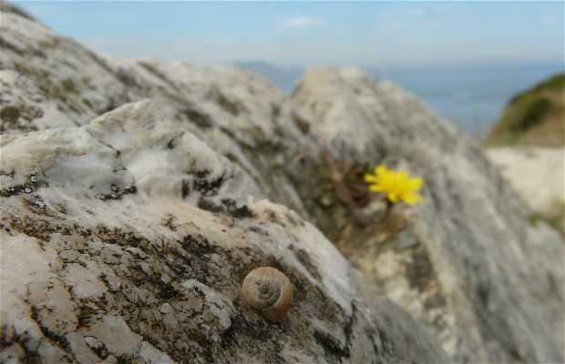Galea Peak