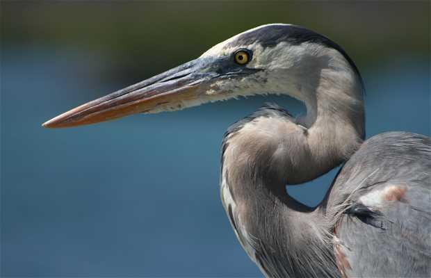 Baltra, Galápagos