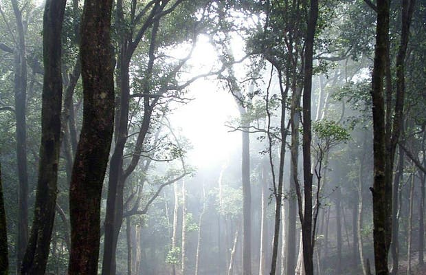 Bosques de Lumas