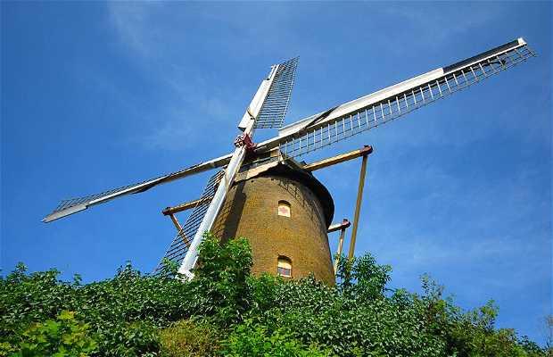 De Korenbloem Windmill