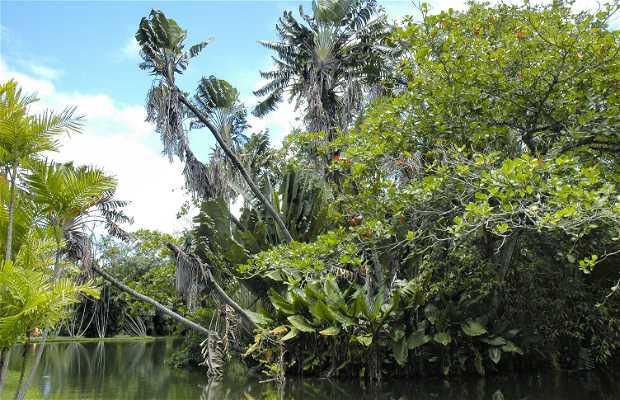 Sir Seewoosagur Ramgolam botanical garden