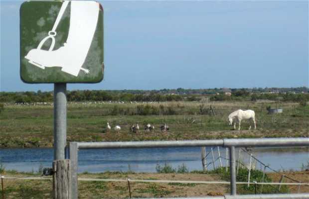 Ranch dans les marais