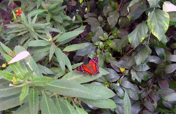 Casa delle farfalle di Vienna