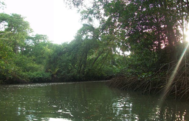 La mangrove de Quepos