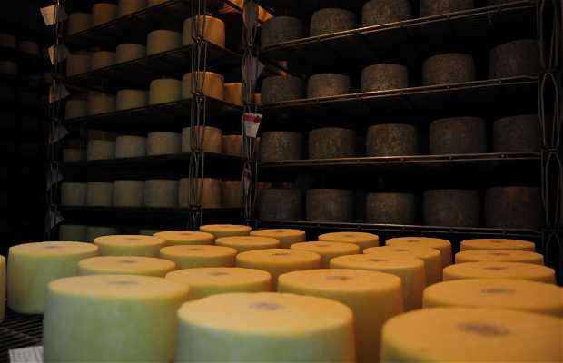 Cheese Pagobieta