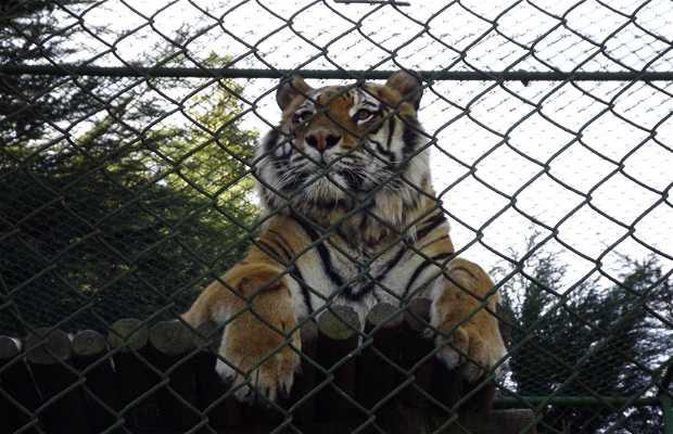 Parque Zooologico Concepcion