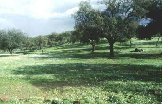 El Pico Hamapega
