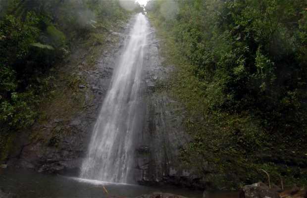 Manoa Fall