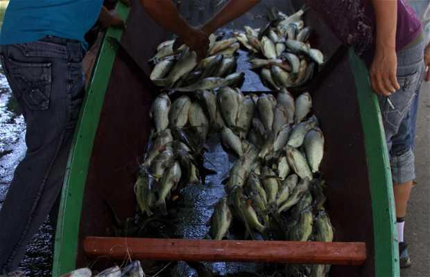 Pescadores de Neiva