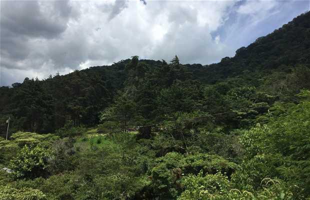 La Carpintera - Canopy